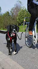 BIKER SET - Abstandshalter für Hunde am Fahrrad - Fahrrad Hundeleine