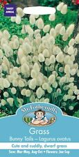 Mr Fothergills - Grass Bunny's Tails Lagurus Ovatus - 200 Seeds