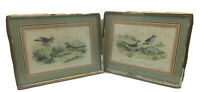 Pair Antique 19th C. Ornithology Delarue Paris Lemercier LITHOGRAPH Birds 11X9""