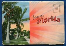 Beautiful Florida fl royal palms coconuts linen postcard folder