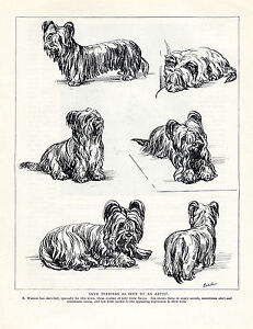 SKYE TERRIER TWO NAMED DOGS OLD 1934 DOG PRINT