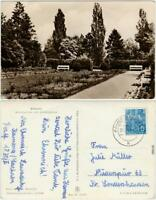 Kamenz Kamjenc Rosengarten am Lessinghaus Ansichtskarte Oberlausitz   1953
