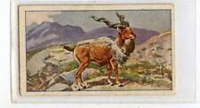 (Jb3103-100)  SNIDERS & ABRAHAM,ANIMALS GREEN,MARKOR,1912#