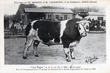 """CPA 61 SEES ELEVAGE DE Mr BISSON ET R.LAMBERT A LA CHALERIE """"LE TIGRE""""  (SUPERBE"""