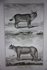 GRAVURE ORIGINALE SUR CUIVRE MARTINET 1768 HISTOIRE NATURELLE LE COUGAR LE LYNX