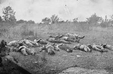 Rebel Dead Soldiers Gettysburg PHOTO Confederate Civil War, Rose Farm 1863 CSA
