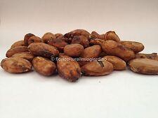 250g Semi o Fave di Cacao BIO - Qualità TOP