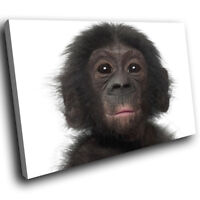 A360 Black Baby Monkey Black Funky Animal Canvas Wall Art Large Picture Prints