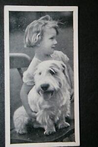 Sealyham Terrier and Child   Original Vintage Photo Card