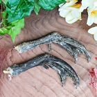 x37a Taxidermy Pair Duck feet craft Oddities Curiosities repair specimen voodoo