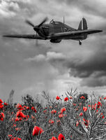 A4 Print - Hawker Hurricane Aeroplane Flying Over a Poppy Field (WW2 Picture)