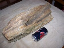 32 pound Petrified Wood Log N W Louisiana Red River