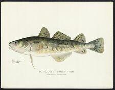 SHERMAN F. DENTON Antique 1902 Folio Chromolitho Bookplate TOMCOD or FROST-FISH