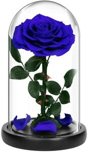 Stunning top quality everlasting roses in glass dome that last for years !!!