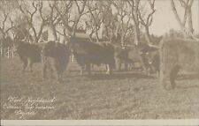 ARGENTINA CAMPO LUJAN  WEST HIGHLAND CABAÑAS SIN ENRIQUE REAL PHOTO