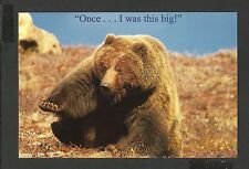 Colour Postcard Portrait  Grizzley Bear Once I was ts Big Alaska unposted