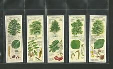 CIGARETTE/TEA CARDS TY-PHOO 1938 TREES IN THE COUNTRYSIDE - FULL SET