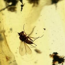 More details for fly insect inclusion in baltic amber fossil eocene fsr115 ✔100%genuine✔ukseller