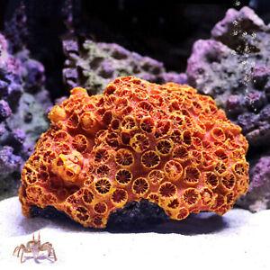 Artificial Coral Reef Fake Sunflower Plant Aquarium Ornament Fish Tank Decor DIY