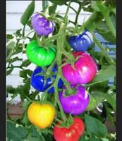 COLORED Tomato 100 Pcs Seeds Bonsai Edible Tomato Vegetables Garden Plants NEW K