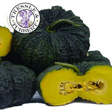 Rare Toad pumpkin, heirloom Thai vegetable - 5 seeds -   UK SELLER