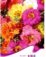 FD1351 Sweet Sun Plant Flower Seed Portulaca Grandiflora ~1 Pack 200 Seeds~