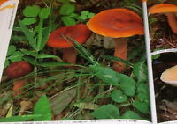 FUNGI OF JAPAN 945 varieties book Japanese mushroom #0838