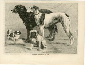 OLD 1864 PRINT ENGRAVING DOGS AT DUBLIN DOG SHOW BULLDOG GREYHOUND SETTER S25