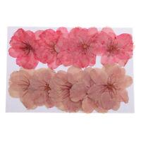 10pcs Beautiful Pressed Dried Sakura Flowers Cherry Blossom for Scrapbooking