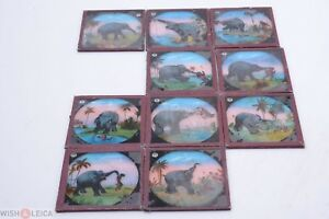 ✅ 10 PICTURES GLASS MAGIC LANTERN 'ELEPHANT FIGHTS, RACIST' PROJECTOR SLIDES 6
