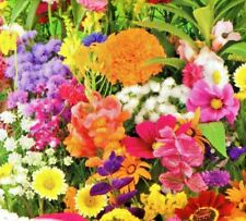 DWARF ANNUAL SUMMER FLOWERS MIXED - 10G (4SQM)  HIGH QUALITY FLOWER SEEDS