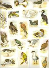 Birds Original Collectable Cigarette Cards