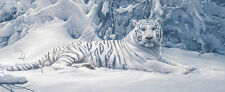 TIGER ART PRINT - White Tiger by Daniel Smith 14x30 Snow Cat Wildlife Poster