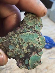 Damele Turquoise / Varasite