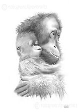 BABY ORANGUTAN and Mother Pencil Drawing Art Print Picture Rare Gift Present
