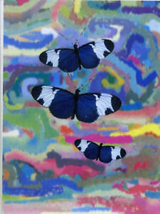 12  BUTTERFLY MINI GIFT NOTELETS WHEN ENVELOPES ARE NOT NEEDED [FREE P&P]