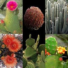 Cactus Mix Rare Succulents Cacti Variety Exotic Flowering Species 25 Seeds Usa