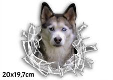Rassehunde Aufkleber Husky *im Glas-Loch* / 20 x 19,7 cm / Konturenschnitt