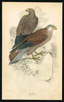 1840 Kestrel Falcon, Male & Female Birds, Hand-Colored Antique Ornithology Print