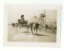 Circus Photography - Camel Hitch - Vintage Glossy Snapshot Photograph
