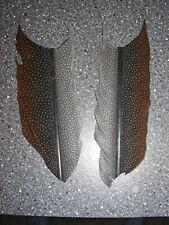 Argus Pheasant - Tail Feathers (Cut)