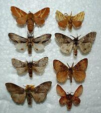Lasiocampidae, Mix 26,Europa