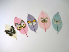 Pressed Butterflies Taiwan Republic Of China  5 Beautiful Butterflies Decor