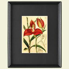 Vintage Grabado Botánico hortícolas victoriana arte Sketch Poster A3 No. 3