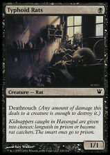 MTG 4x TYPHOID RATS - RATTI DEL TIFO - ISD - MAGIC