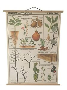 Different type of Sprouts pull down chart, Botanical school chart, Botanical