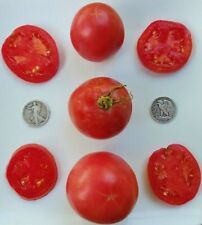 Arkansas Traveler - Organic Heirloom Tomato Seed - The Perfect Slicer - 40 Seeds