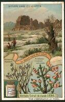 Cactus Succulent Desert Flower Plant Utah c1909 Trade Ad Card