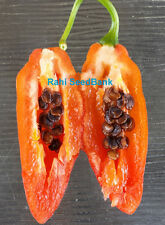 Rocoto Aji Largo - An Ultra Unique Chilli You will Ever find on this Planet!