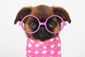 Funny Cute Puppy In Hot Pink Sunglasses Photo Art Print Poster 24x36 inch